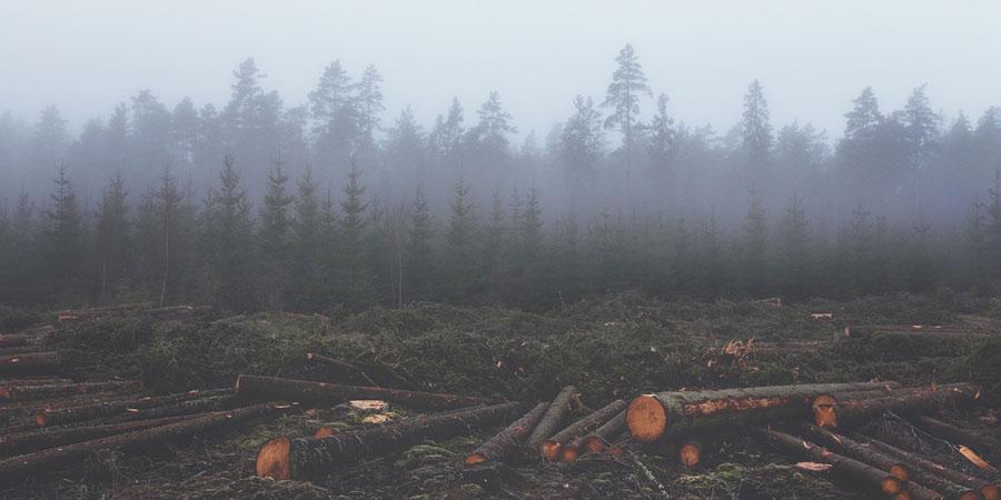 Deforestazione foresta pluviale causata dalle piantagioni di Palme da Olio
