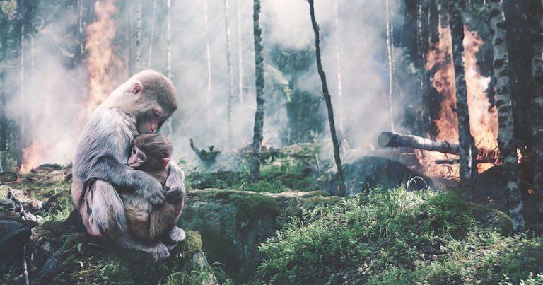 Deforestazione - Foresta brucia con mamma scimmia e suo figlio