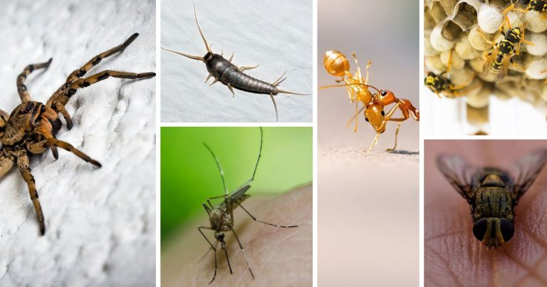 Natural remedies against insects: remove them without killing them