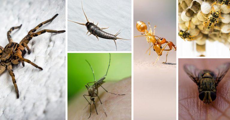 Rimedi naturali contro gli insetti: allontanarli senza ucciderli